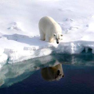 El segundo año más cálido en el Ártico