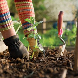 Making A Difference w/Megan Marie: National Garden Bureau