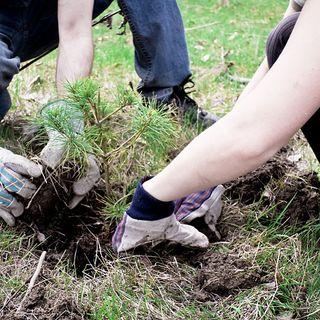 Riforestazione perfetta Basta seguire 10 regole