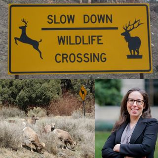 Wildlife Corridors Conservation Act - Kate Wall, IFAW, on Big Blend Radio