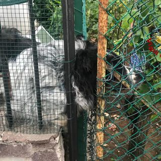 I guaiti disperati attirano i vicini: il cane Max era intrappolato. Ci pensano i pompieri a liberarlo