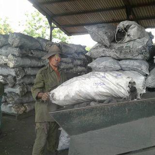Más de 600 toneladas anuales de carbón vegetal avalan el compromiso de la UEB Silvícola unionense