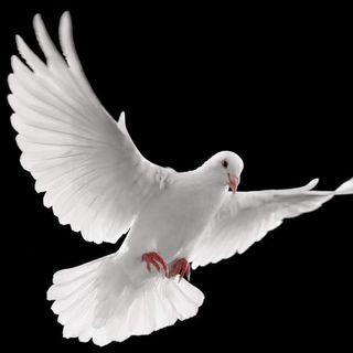 Novena al Espíritu Santo Día 9