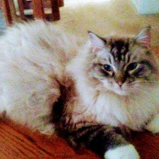 Happy Birthday, My Kitty Max
