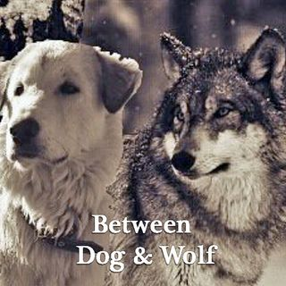 TSP115 - PH Factor: Between dog and wolf.