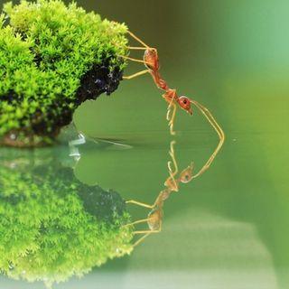 El ingenio de una hormiga