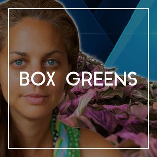 63 Lisa Merkle on Box Greens, Sustainability, and the Future of Hydroponic Farming