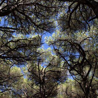 Con boschi ben gestiti, il carbonio assorbito sale del 30%