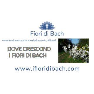 01-dove crescono-fiori-di-bach