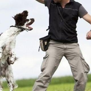 Kip Lewis - Expert Livestock Trainer