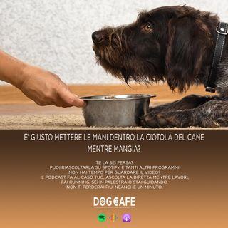 #057 - eE' giusto mettere le mani dentro la ciotola del cane mentre mangia?