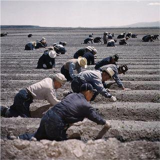 Supermensch, Pi Day, farming at Tule Lake Segregation Center