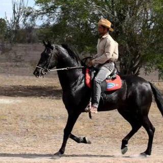 Episódio 90 - Cavalo Inveja e a Mula Manca