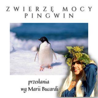 Zwierzę Mocy - Pingwin - komunikacja społeczna i elegancja - Maria Bucardi