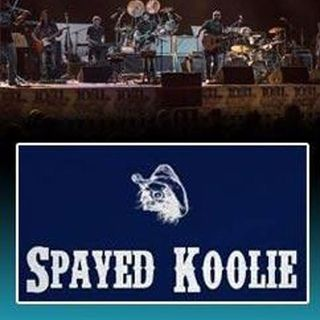 Spayed Koolie Interview