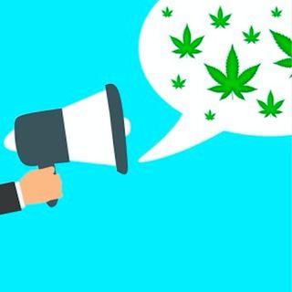 Disinformazione sulla Cannabis al Tg2: demoliamo le loro bufale!