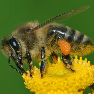 Bees, trees, and More