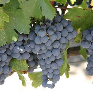 Neuroplasticidad con el Dr. David López y características de la uva malbec con Sandra Fernández