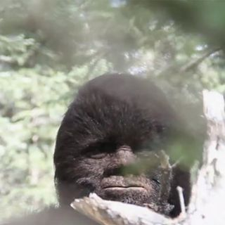 Episode 16: Sasquatch is Real!