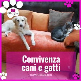 E' possibile la convivenza cani e gatti?