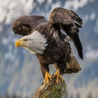 """""""The EAGLE In YOU"""""""