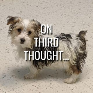 On Third Thought... - Morning Manna #3185