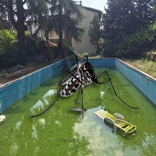 conversazione assessore Bettini sull'ex piscina Fiorentina Nuoto