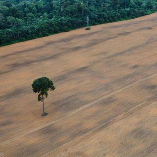 Soia per biocarburanti, il nuovo amico della deforestazione