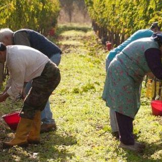 Tutto Qui - Giovedì 14 Marzo - Siglato protocollo d'intesa contro il caporalato in agricoltura