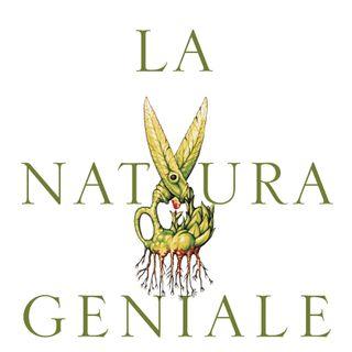 """Barbara Mazzolai """"La natura geniale"""""""
