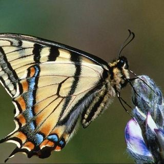 NUOVA ERA  Emotions of a Butterfly