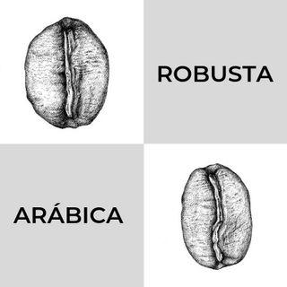 Café Arábica o Robusta ¿cuál deberías preferir?