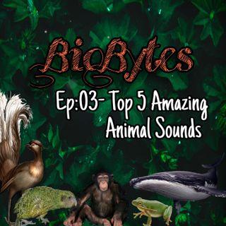 Top 5 Amazing Animal sounds !