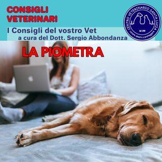 13 - La piometra, una grave infezione batterica nei cani femmina