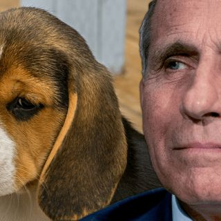 Dr Fauci Exposed Conspiracy Podcast | Cruel Animal Treatment