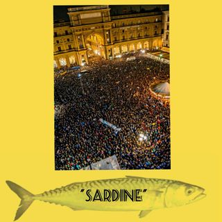 """""""Sardine"""""""