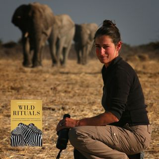 Elephant Researcher Dr. Caitlin O'Connell