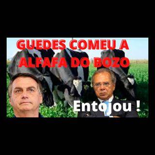 Guedes teve indigestão da alfafa superfaturada da familícia de Bolsonaro