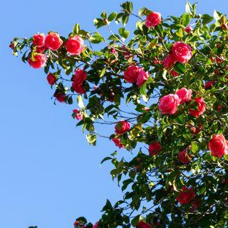 10_Il patrimonio botanico del Giardino Inglese