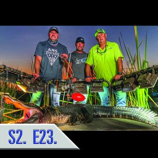 Bowfishing for Florida Alligators