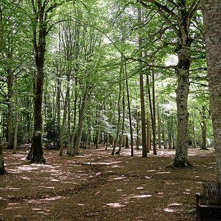 Il Recovery Plan italiano nemico delle foreste