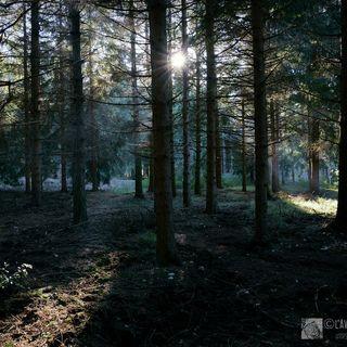 Tutto Qui - martedì 6 agosto: Per una reale filiera del bosco