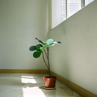 Episodio 58 - minimalismo