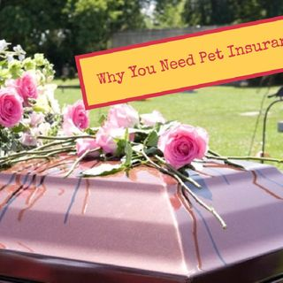 Why you need Pet Insurance!
