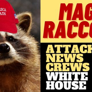 LONG LIVE THE MAGA RACCOON