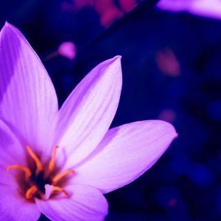 Todo acerca del Perdón y la Paz Perfecta
