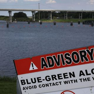 David Whiting DEP Blue-Green Algae