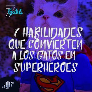 7 Habilidades que convierten a los gatos en Super Héroes