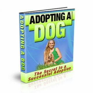 Adopting a Dog 9