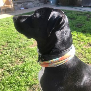 The Traci Shoblom Show: Mental Health (and Why My Dog Won't Stop Barking)